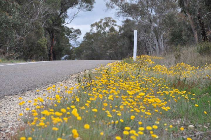 yellowflowers2