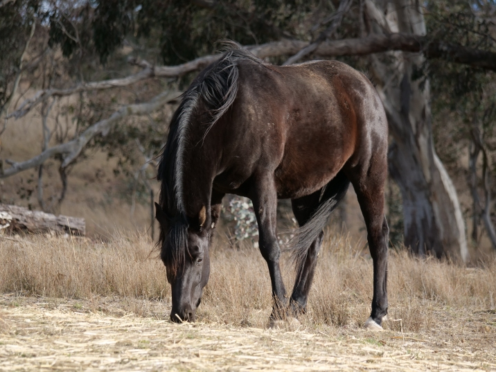 thehorse