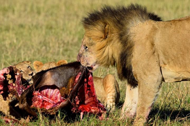 feeding