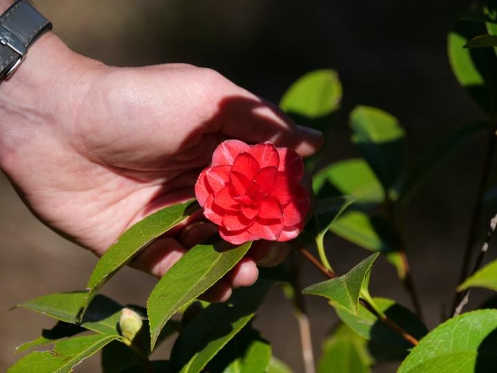 delicate blossom.jpg