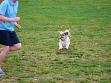Attack dog.