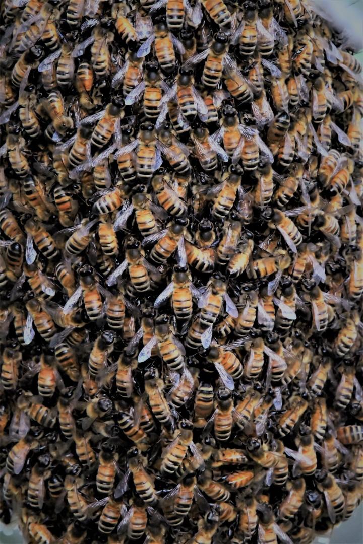the swarm.jpg