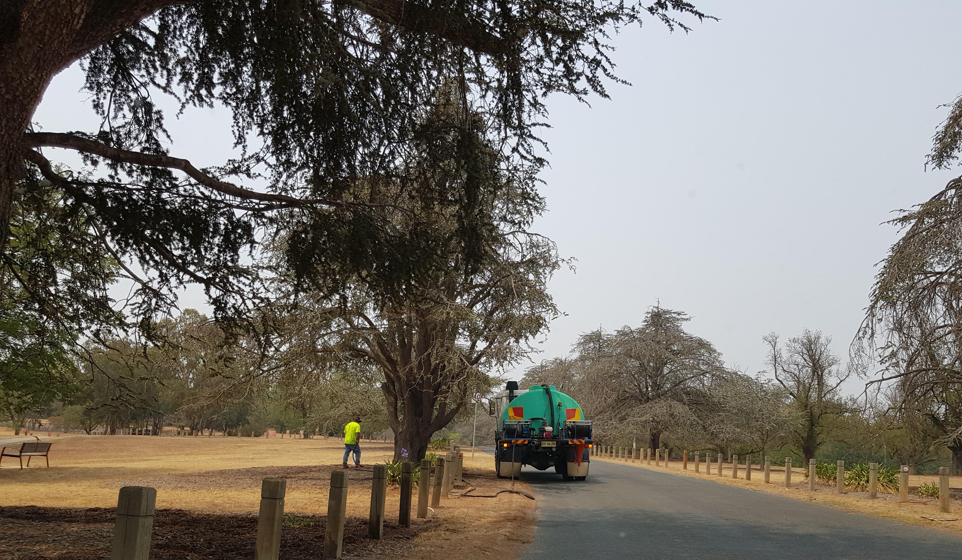 watering park trees